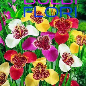 bulbi de orhidee de gradina