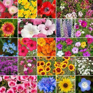 seminte de flori profesionale